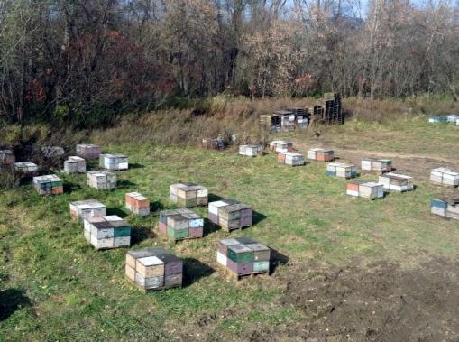 Dio pčelinjaka u New Yorku kojim upravljaju Krajišnici